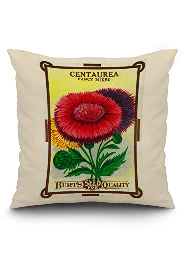 Amazon.com: Centaurea semillas: Home & Kitchen