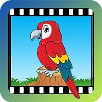 (KT) Video Touch - Birds