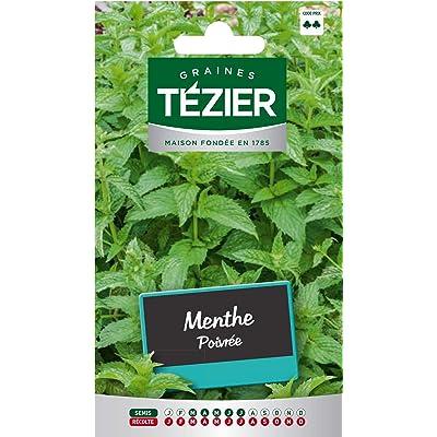 Seed Bag Peppermint Tezier : Garden & Outdoor