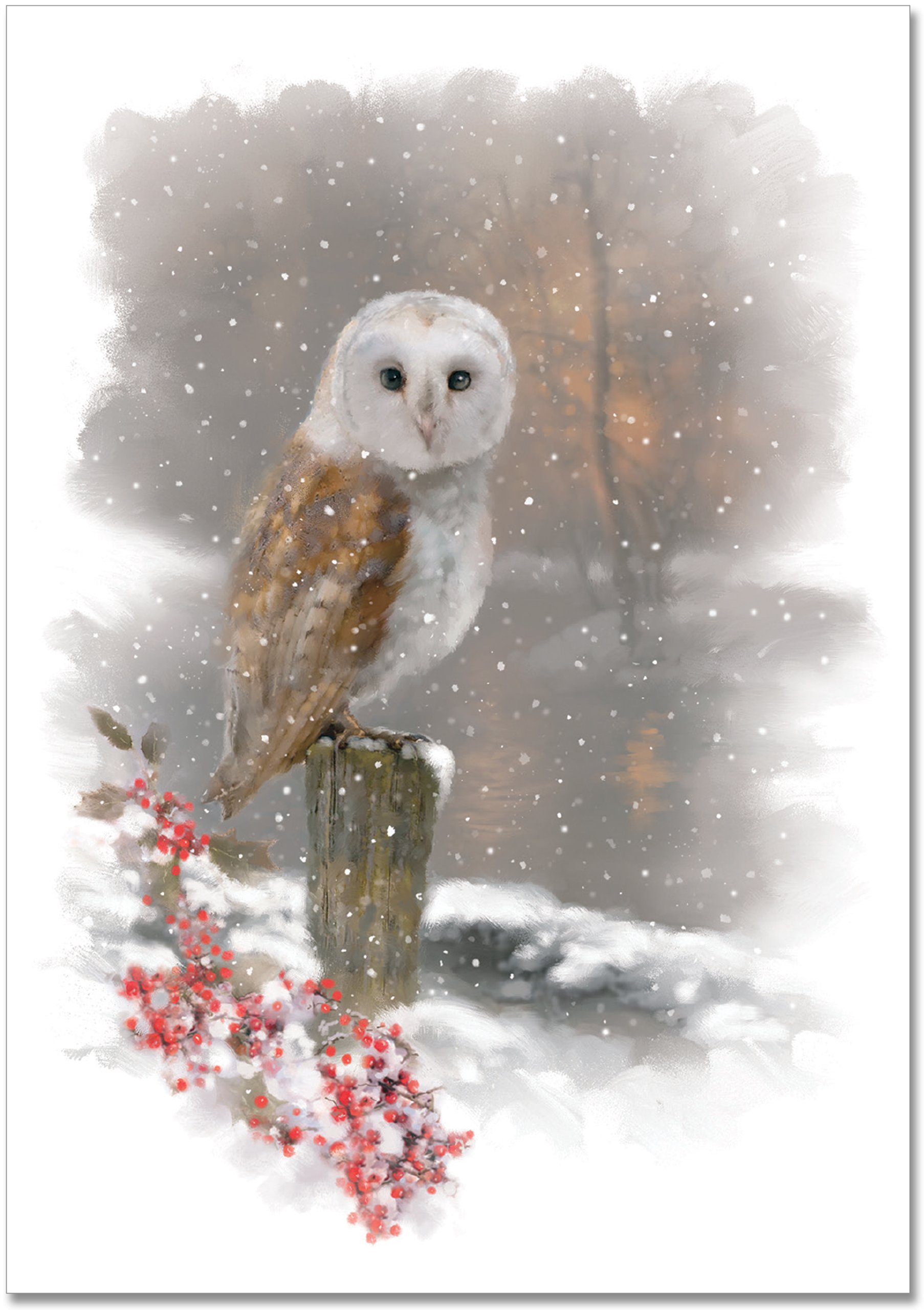 Christmas Owl.Winter Owl Small Boxed Holiday Cards Christmas Cards
