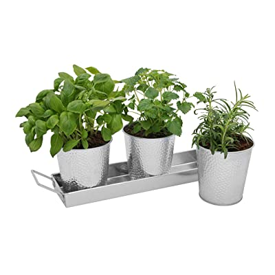 Saratoga Home Herb Pots with Tray Set - Indoor Windowsill Galvanized Planters with Drainage Holes for Healthy Plants: Kitchen & Dining