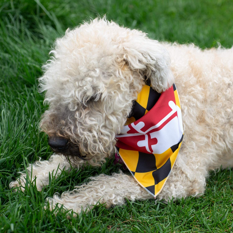 Maryland Flag Dog Bandana
