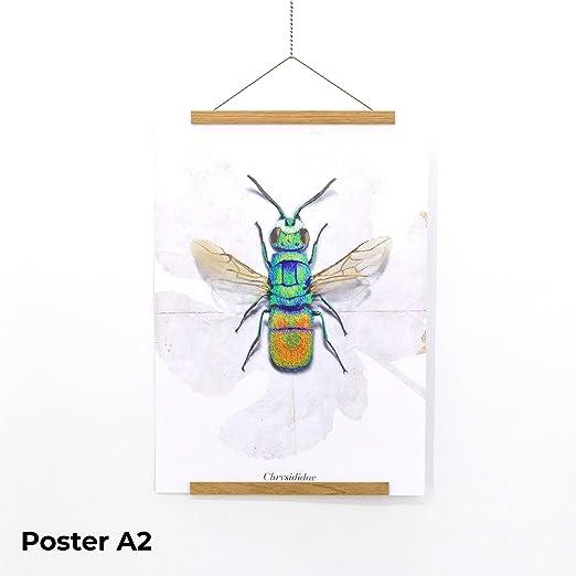 Posterleisten mit transparenter Schnur A1,/A2,/A3,/A4,/1/m. Zeichnungen Poster f/ür Karten A0 portrait
