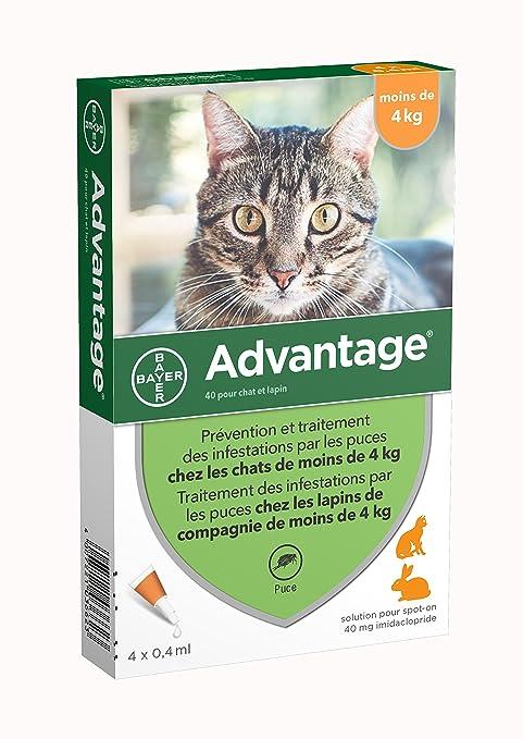 médicaments anti puces pour chat