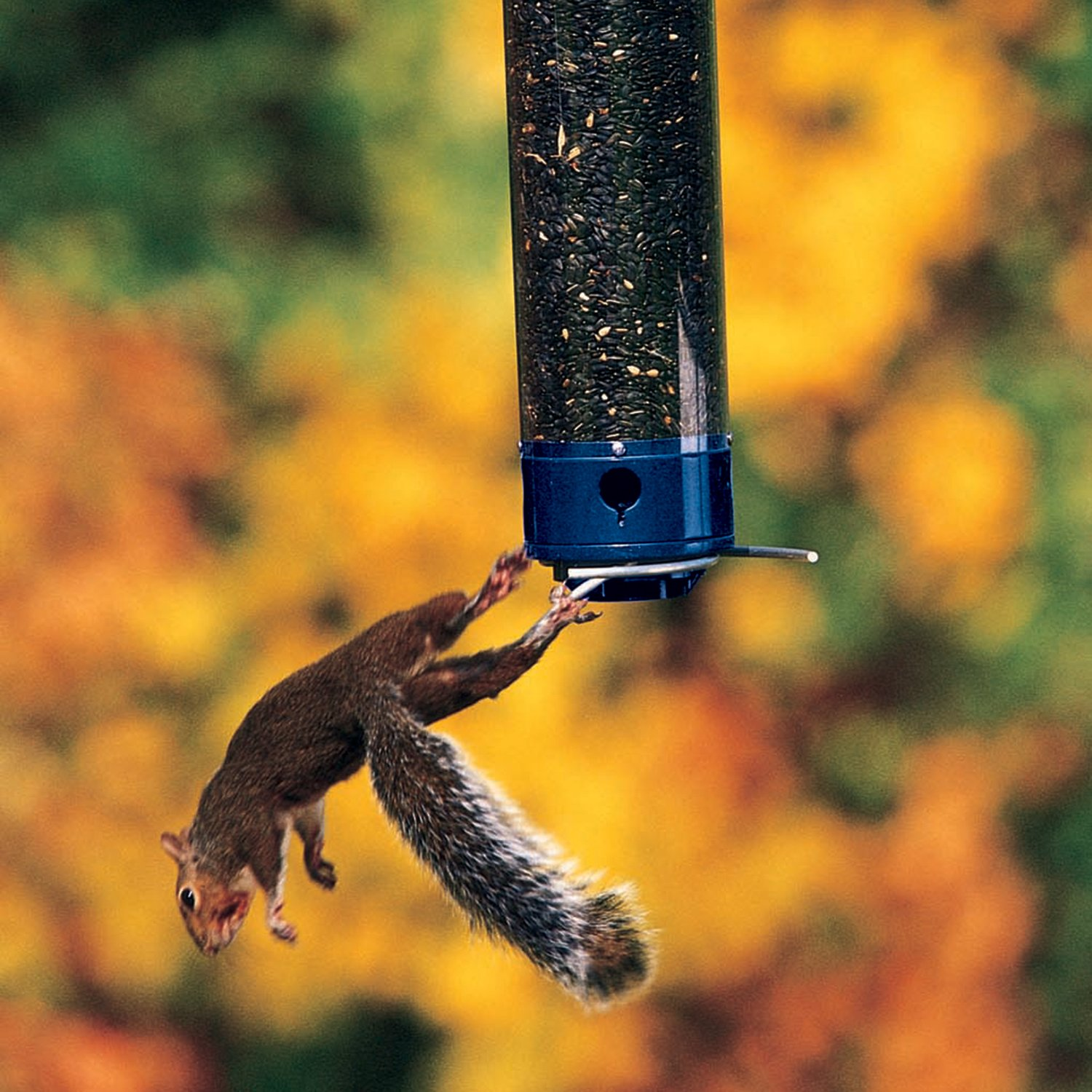 Droll Yankees Yankee Whipper Squirrel-Proof Bird Feeder, 21 Inches, 4 Ports, Blue by Droll Yankees (Image #4)