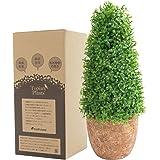 フェイクグリーン 光触媒 トピアリー スタンダード お世話のいらない 癒しの グリーン 観葉植物 インテリア 人工観葉植物