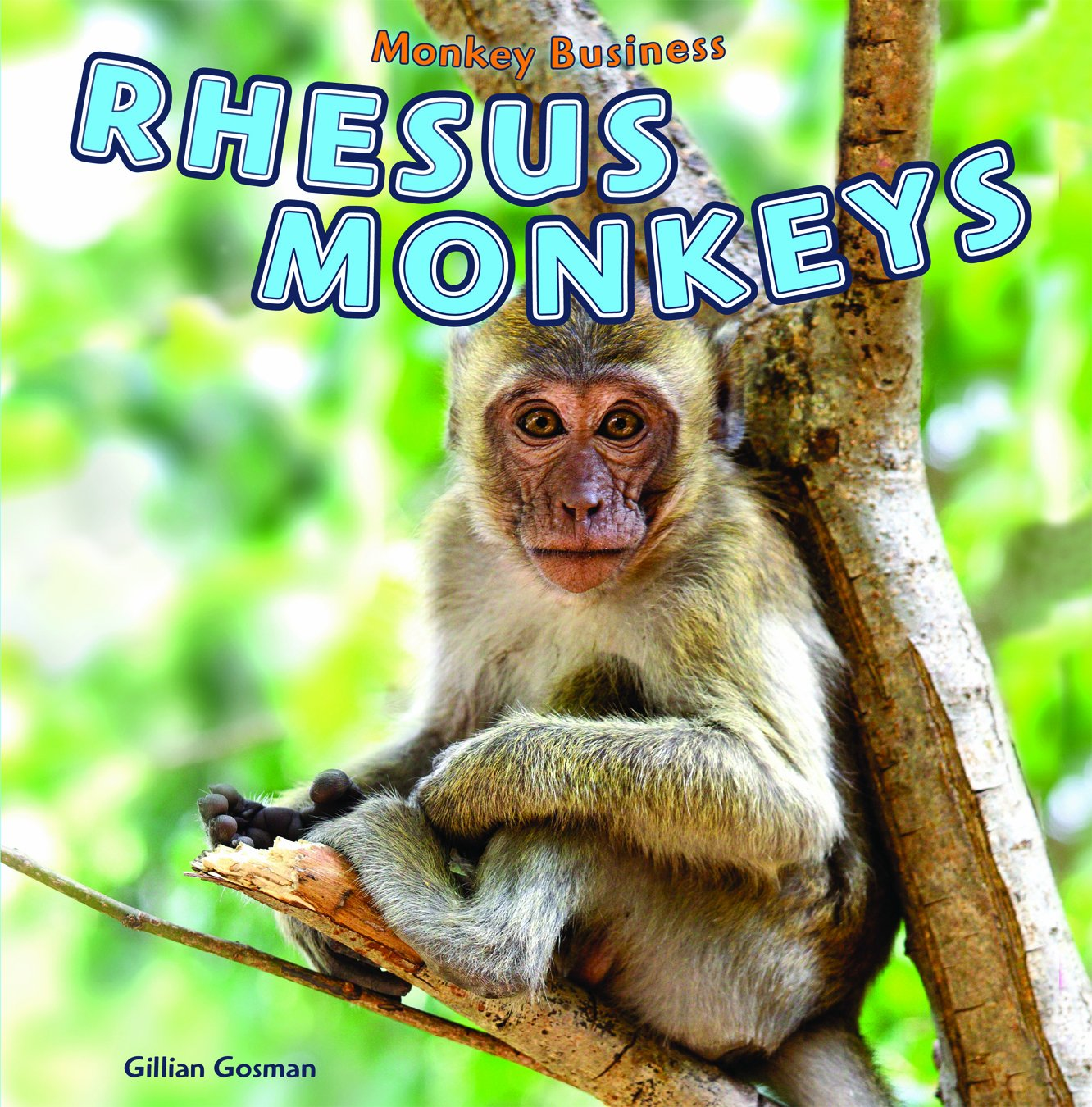 Rhesus Monkeys (Monkey Business)