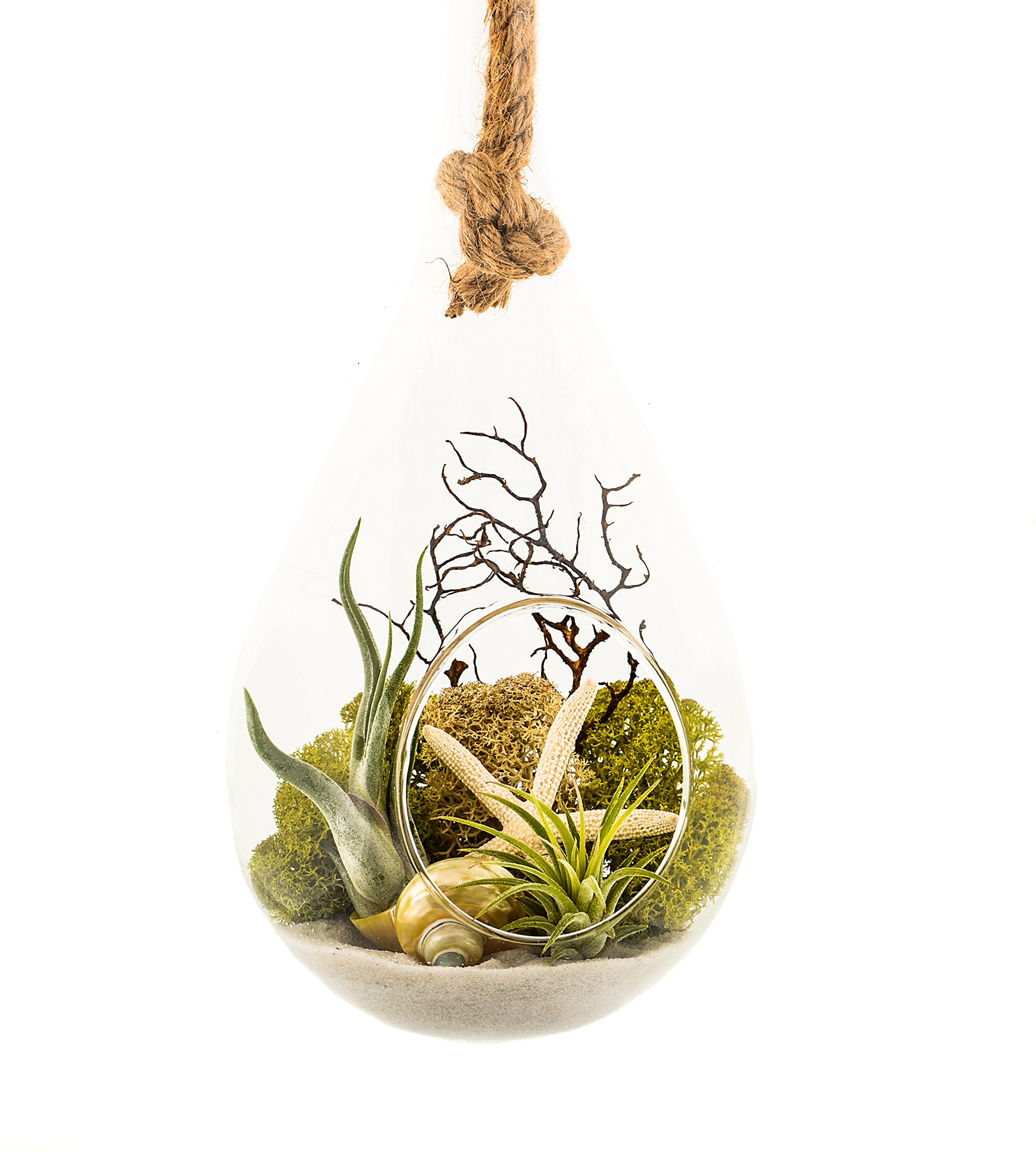 Air Plant Terrarium with Sea Fan, Moss & Sea Shells, Hanging Teardrop, 10 inch Nautical