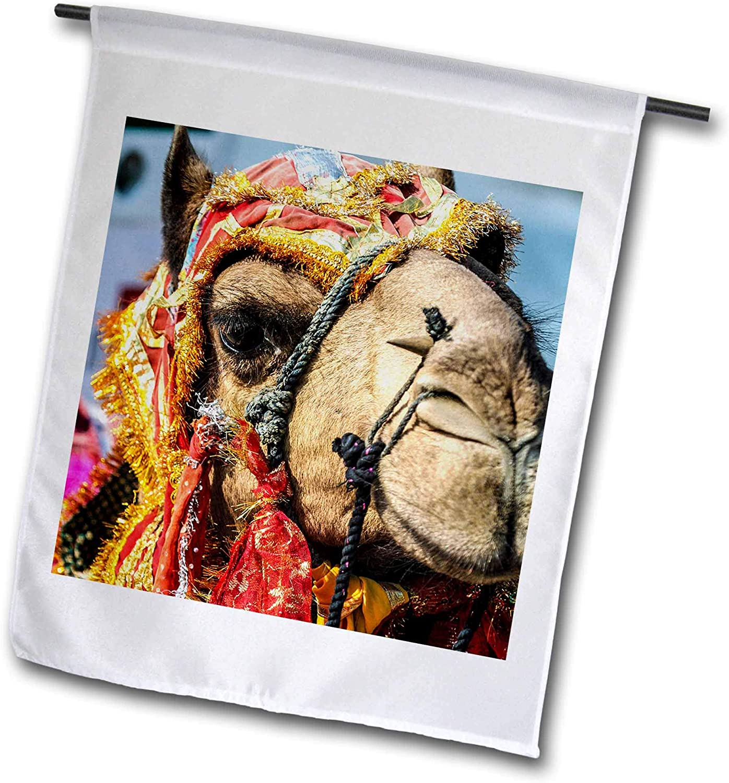 3dRose Danita Delimont - India - Udaipur, Rajasthan, India, Decorated Camel, Diwali Festival of Lights - 12 x 18 inch Garden Flag (fl_312708_1)