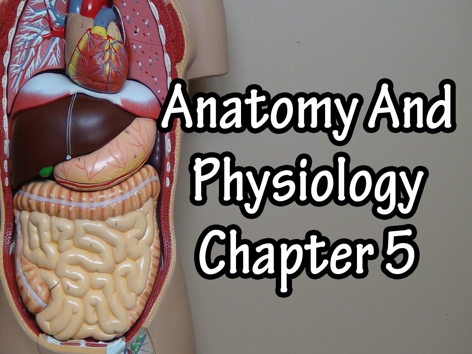 Anatomy And Physiology Chapter 5 on Amazon Prime Video UK