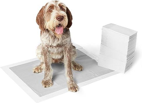 AmazonBasics - Empapadores de adiestramiento para perros, carbón ...