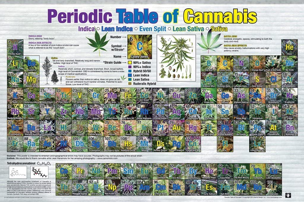 Studio B Laminated Periodic Table of Cannabis Reference Chart Poster 36x24