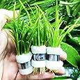 Greenpro Dwarf Sagittaria Subulata 3-Bunch Freshwater Live Aquarium Plants Carpet Tank