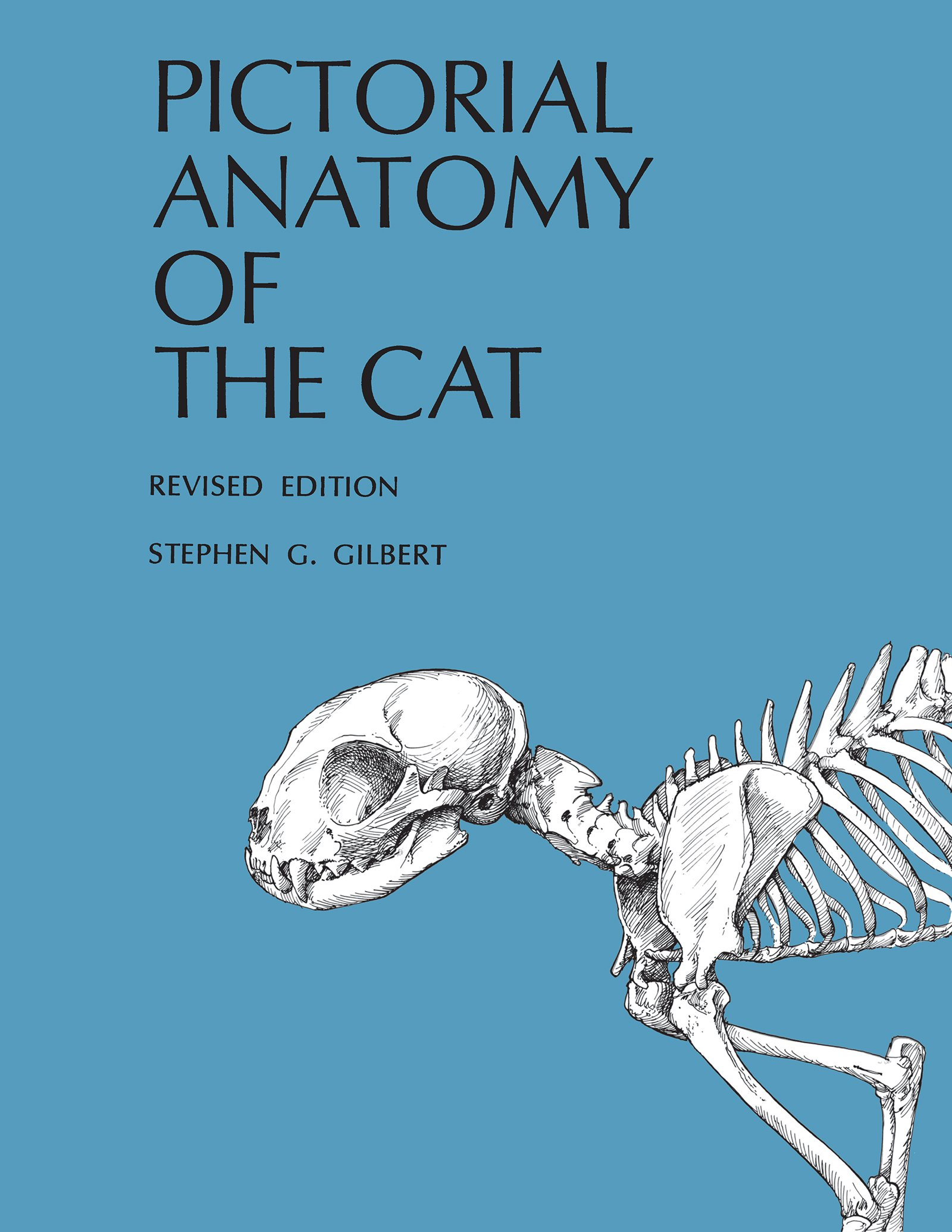 Pictorial Anatomy of the Cat: Amazon.co.uk: Stephen G. Gilbert ...