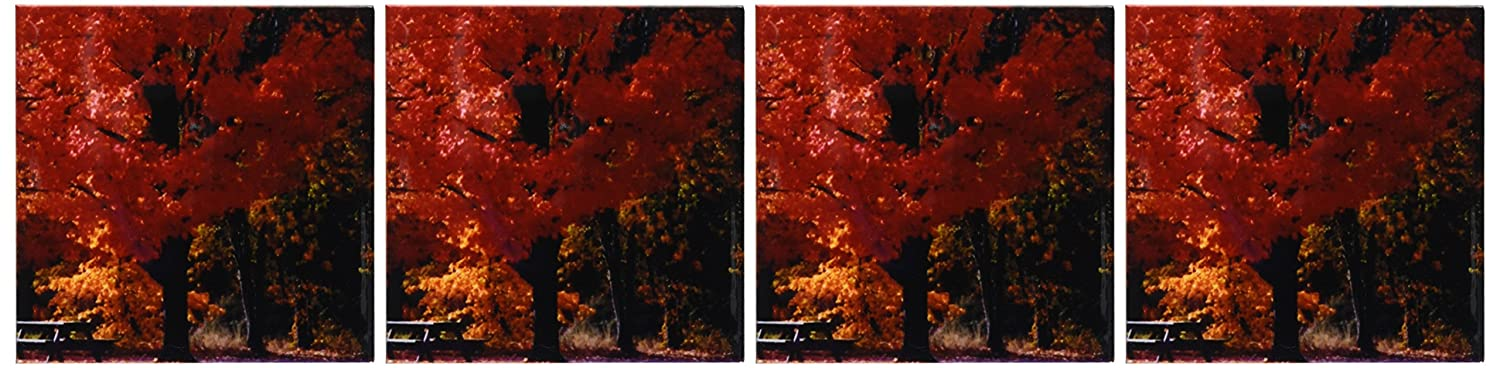 3dRose cst/_31835/_3 Beautiful Red and Orange Foliage in The Fall-Ceramic Tile Coasters Set of 4