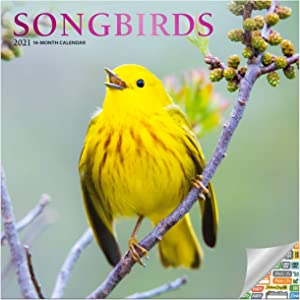 Songbirds Calendar 2021 Bundle - Deluxe 2021 Songbirds Wall Calendar with Over 100 Calendar Stickers (Birding Gifts, Office Supplies)