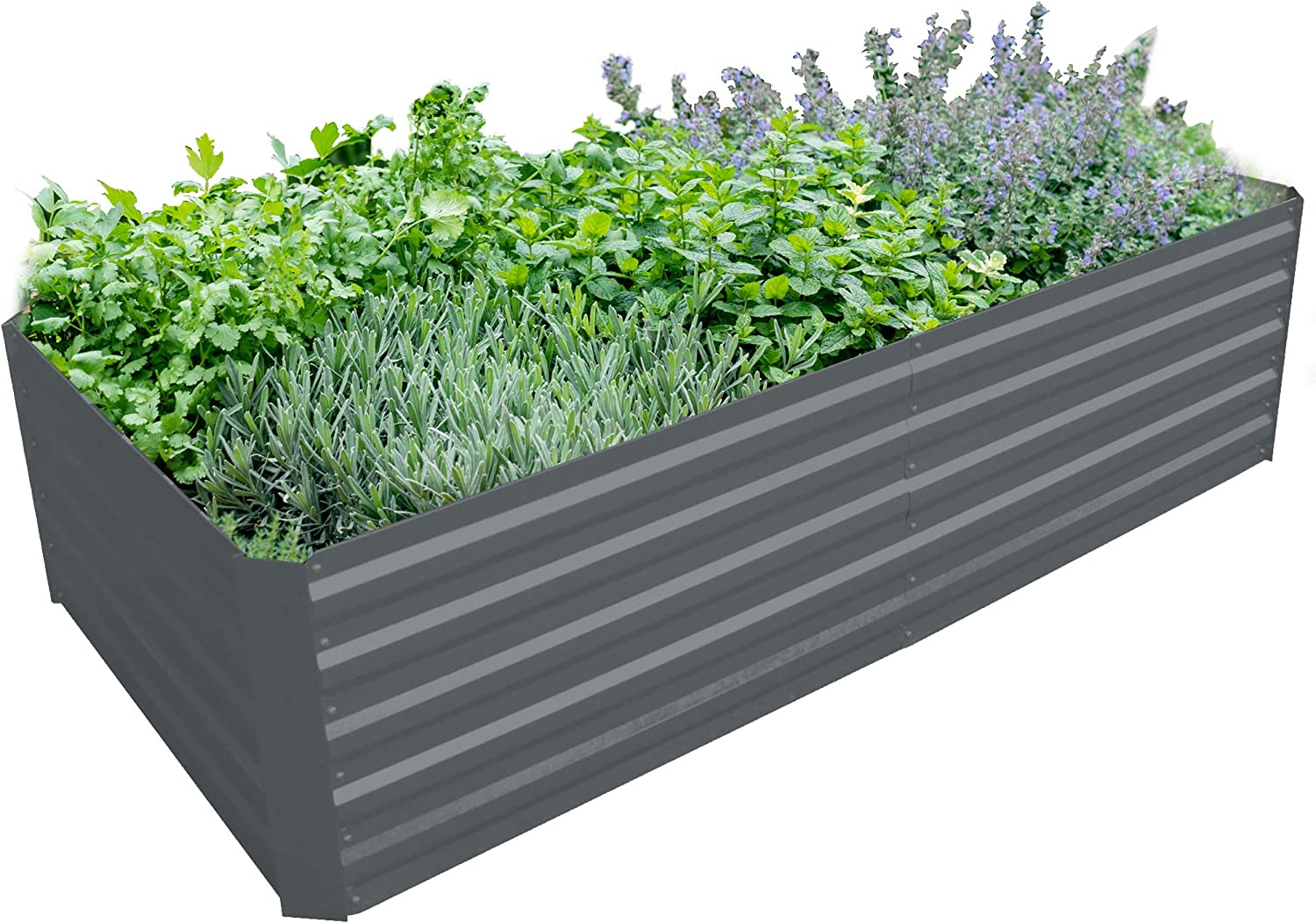 BLUEBERRY HILL Galvanized Steel Raised Garden Bed Extra Height Large Steel Planter Box for Vegetables, Herbs, Flowers. 80x40x19.7 Inch Powder-Coated (Cool Grey)