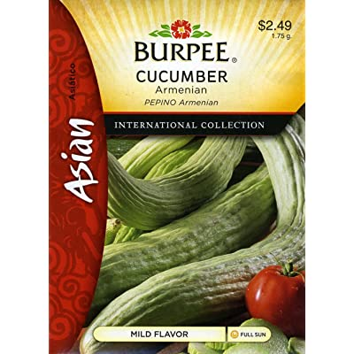 Burpee Cucumber Armenian Asian 69672 (Green) 25 Seeds : Vegetable Plants : Garden & Outdoor