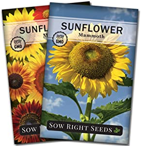 Sow Right Seeds - Sunflower Garden Seed Collection for Planting Outdoors - Large Individual Packets of Mammoth Sunflower and Sunflower Mix. Non-GMO Heirloom Seed to Grow - Wonderful Gardening Gift