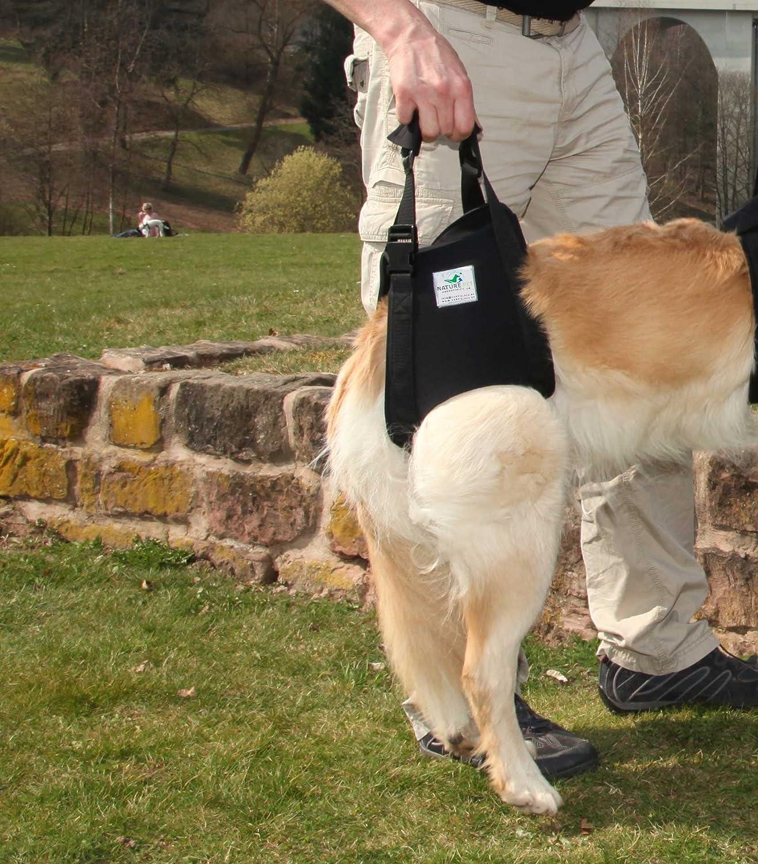 Nature Pet Hunde Tragehilfe Hinten/Hunde Gehhilfe/Hunde Rehahilfe, Das Hilfsgeschirr für Probleme an der Wirbelsäule, der Hüfte und Den Knien Ihres Hundes. NATURE PET GmbH - Dropship THHXL