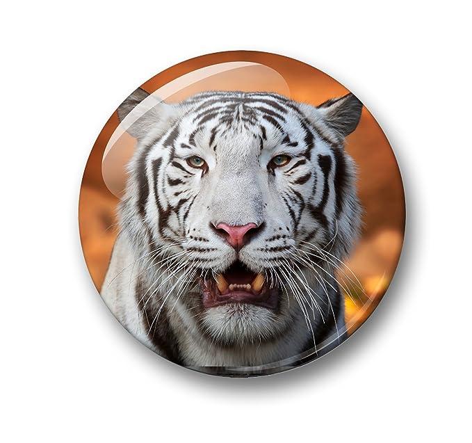 Tigre siberiano Tiger - 6 imanes para nevera diámetro 5,9 cm [02 ...