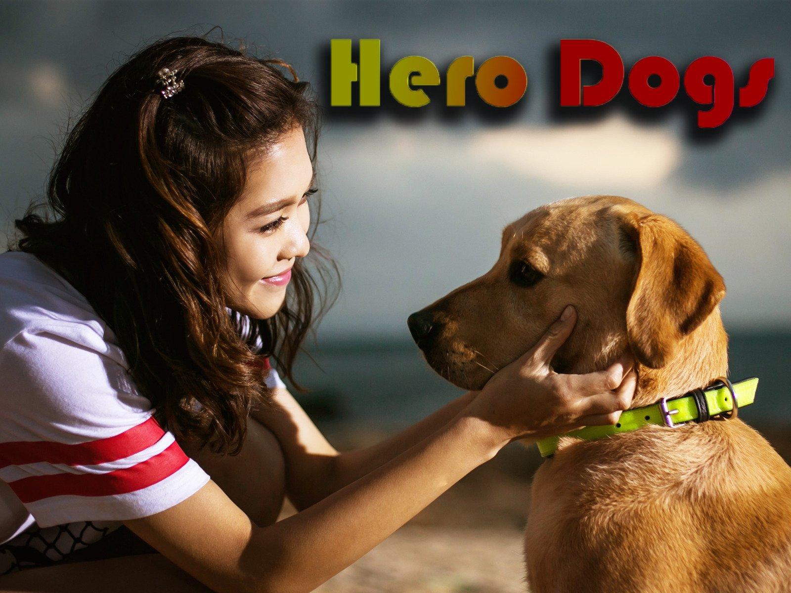 Hero Dogs on Amazon Prime Video UK