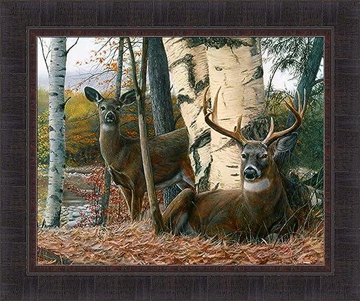 Deer in Sunlight Note Card