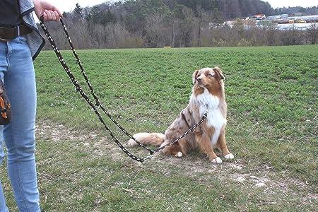 Activity4dogs Hundeleine Geflochten 4 Fach Verstellbar 2 8m Lang 3 Farbig Fur Grossere Und Grosse Hunde Made In Germany Amazon De Haustier