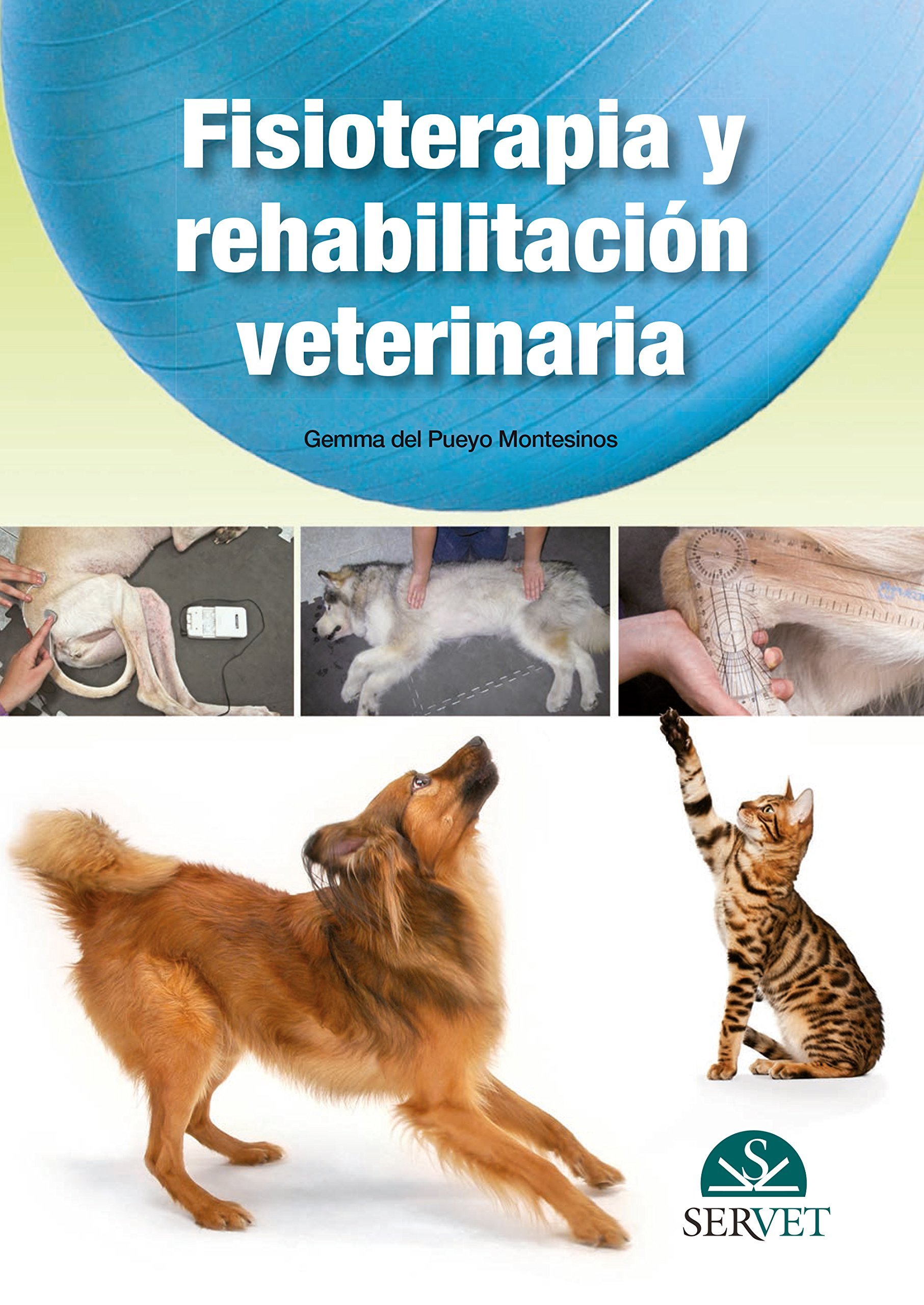 Ferret Medicine and Surgery