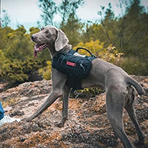 One Tigris Mammoth Backpack for Dogs