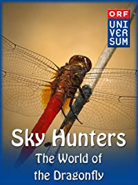 Sky Hunters – The World of the Dragonfly