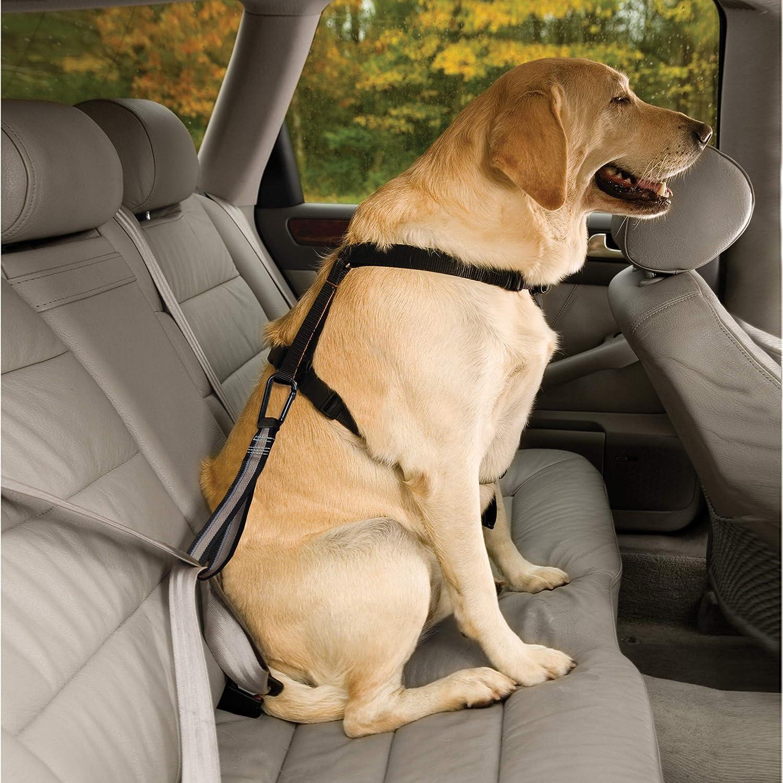 Kurgo Sicherheitsgurt Für Hunde Geschirr Auto Zubehör Hundegurt Fürs Auto Hunde Zubehör Verstellbare Länge Haustier