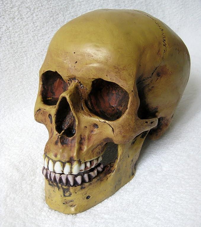 Großartig Anatomie Schädel Kennzeichnung Bilder - Anatomie und ...