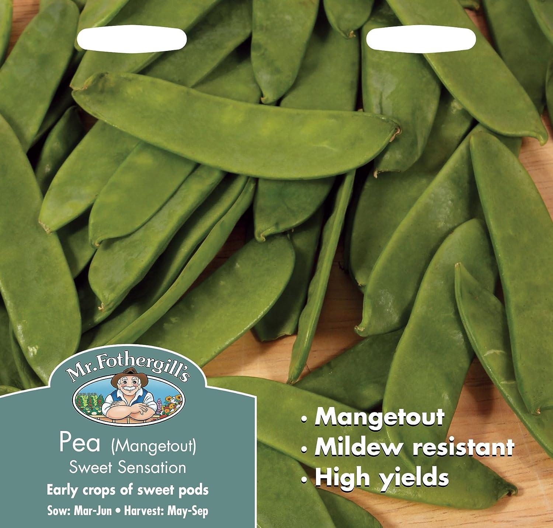 Mr Fothergill?s Seeds Ltd 21323 - Kit de cultivo en casa