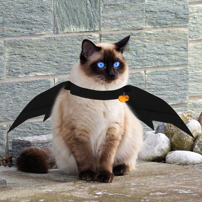 Amazon.com: Disfraz de gato de Halloween de 4 piezas con ...
