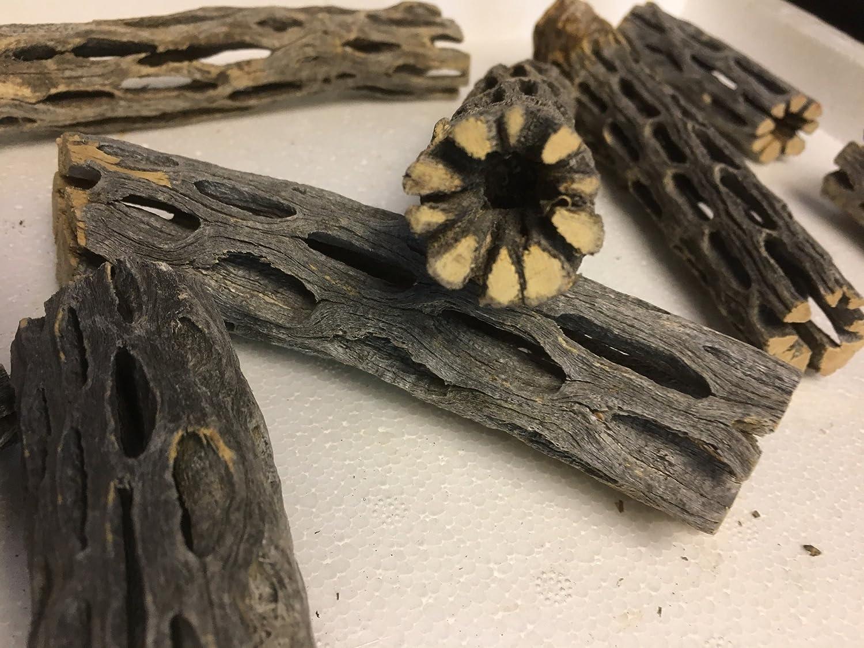 Cholla Cactus Wood (2morceaux env. Ø 2cm, 8et 15cm de long) vuka bois cave Tube Tube Grotte pour crevettes et autres... catappa-leaves