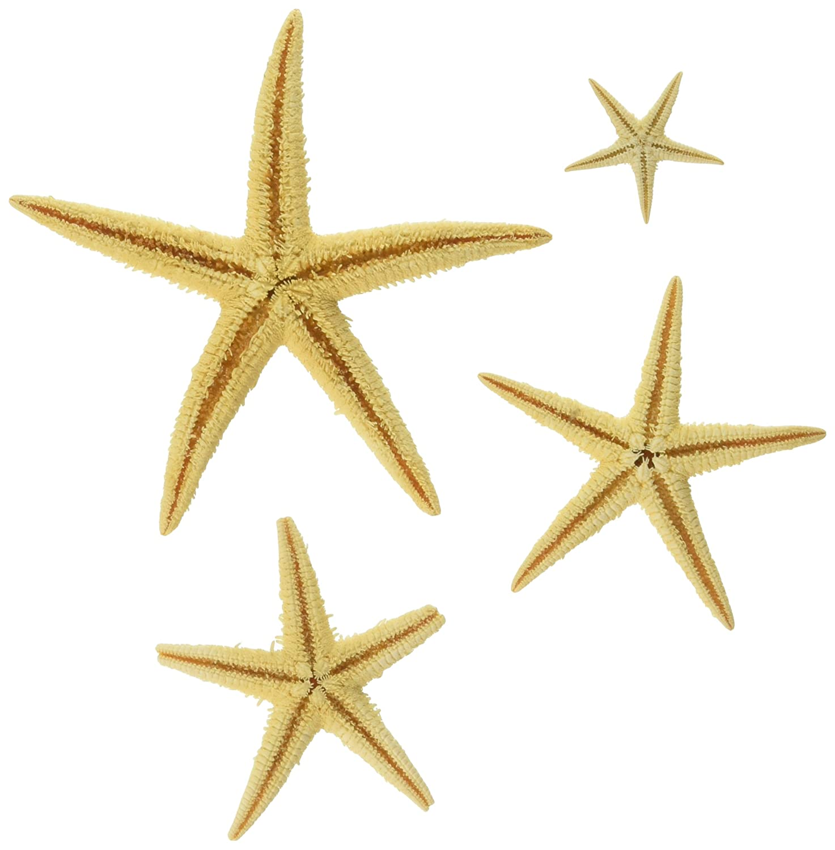 Bulk Starfish Decorations Amazoncom 30 Pcs Bulk Starfish Starfish Decoration Natural