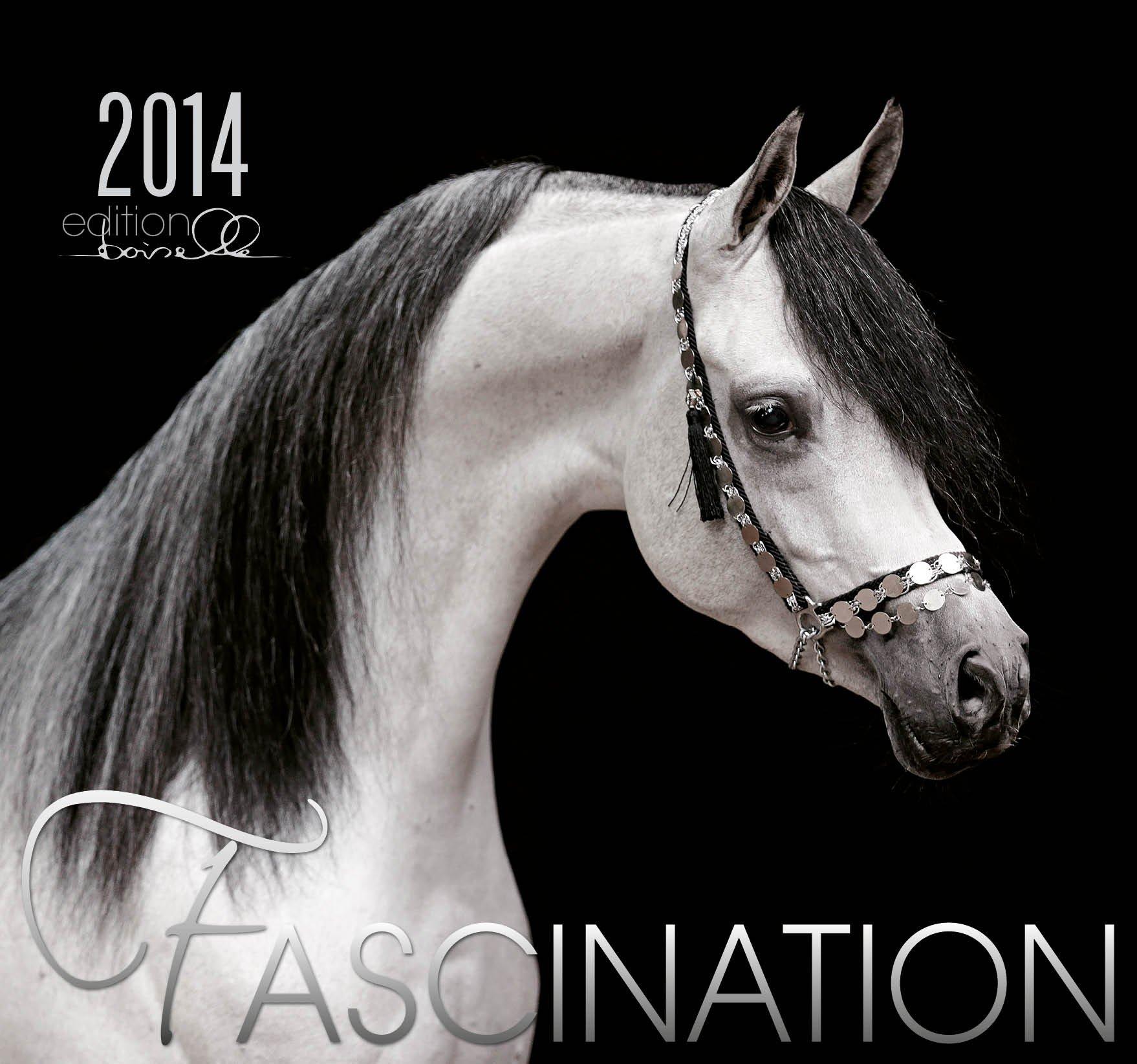 Fascination 2014 Kalender - Arabische Pferde - 62x58 cm