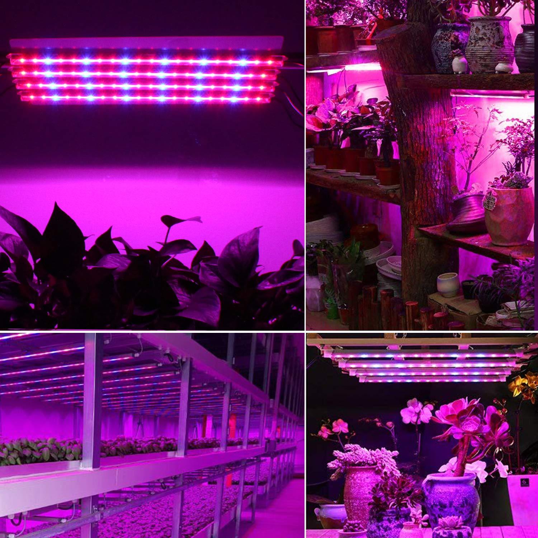 Roleadro IP65 Lampe Horticole Culture Indoor LED Horticole T5 Grow LED avec Minuterie 3H//6H//12H et Luminosit/é Dimmable 25/%//50/%//75/%//100/% pour Int/érieur//Serre//Hydroponique//Grow Box Culture 4Pcs
