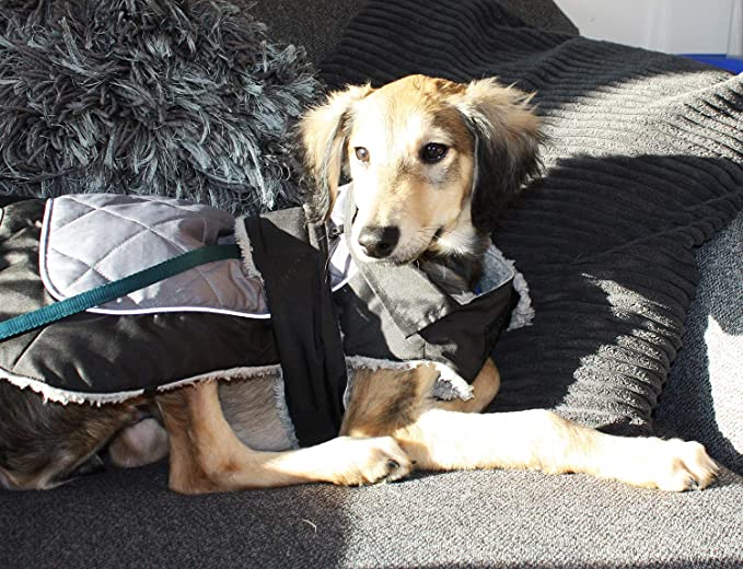 Go Walk Thermal Underbelly Dog Coat Black Grey