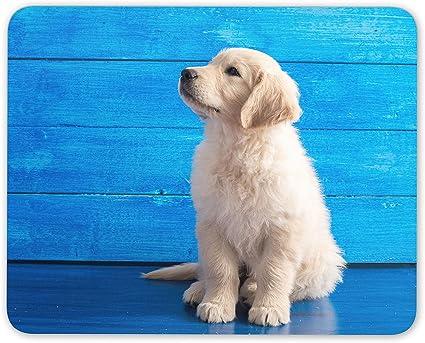 レトリーバー 子犬 ゴールデン