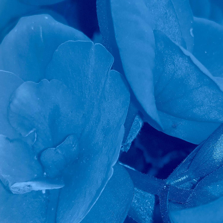 decomonkey Paravent Raumteiler XXL Einseitig Mohnblumen 225x172 cm 5 TLG Trennwand Vlies Leinwand Raumtrenner Sichtschutz spanische Wand Blickdicht Textile Haptik Wei/ß Rot Grau Blumen