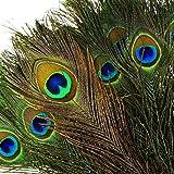 """TEFOMATE 100pièces Plumes de paon naturelles avec des yeux (10""""-12"""") Haute qualité de plumes de queue de paon pour la décoration"""