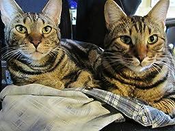 World S Best Cat Litter Multiple Cat Clumping Formula Review