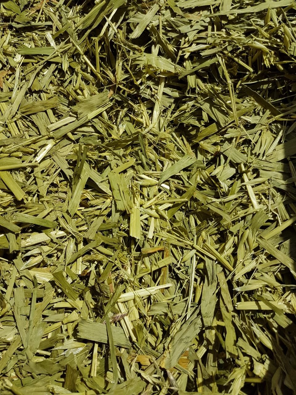 Vert Avoine Vert Avoine Bio Avoine Avoine verte herbe Terra Pura 2kg Top Qualité Terra-Pura-Tiernahrung e.K.