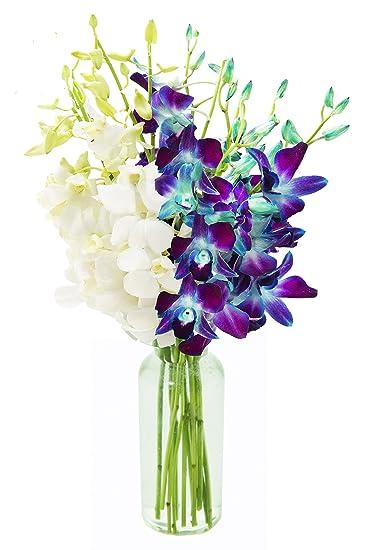 Vase Vanda2 Bei Amazone Bestellen