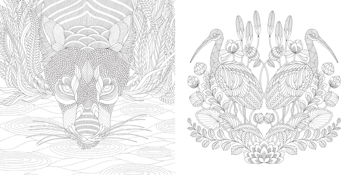 Amazon Animal Kingdom Color Me Draw A Millie Marotta Adult Coloring Book 9781454709107 Books
