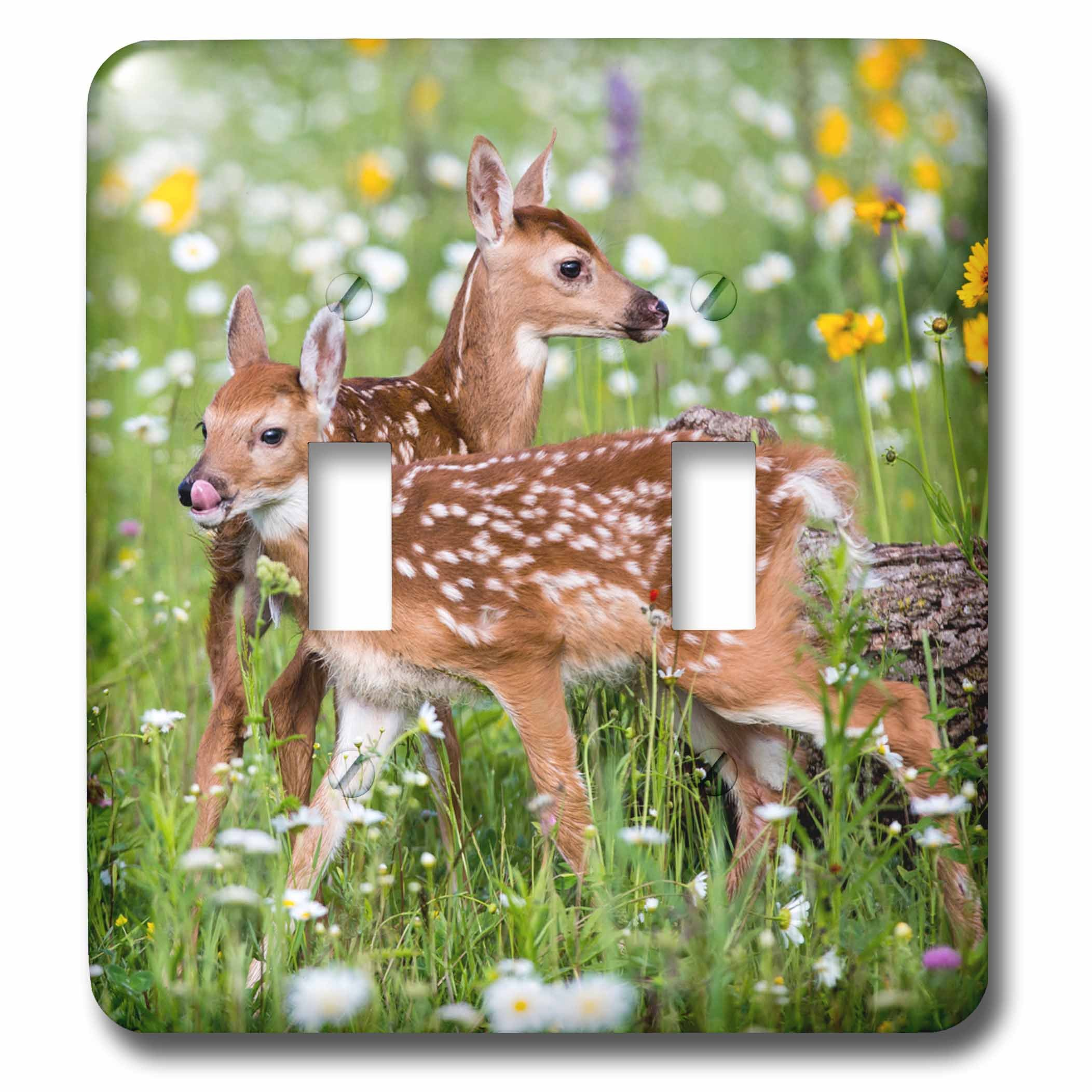 3dRose LSP_279127_2 USA, Minnesota, Sandstone, Two Fawns Amidst Wildflowers Toggle Switch, Multicolor