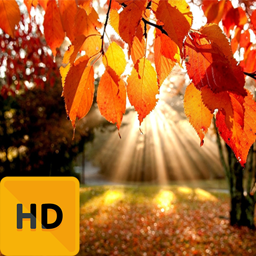 Best Autumn HD FREE Wallpaper (Best Hd Wallpapers For Android)