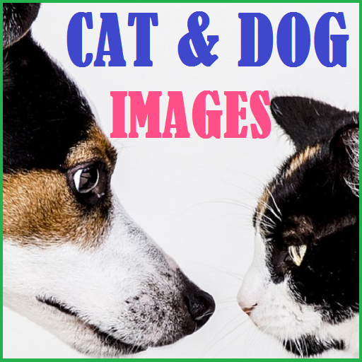 cat-dog-hd-images